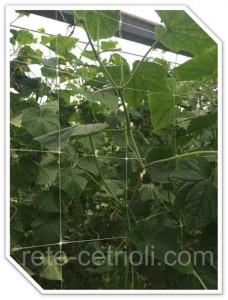 rete cetrioli